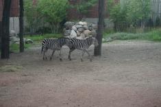 LP Zoo