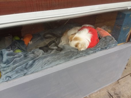 Puppy sleeping in the window if a liquor store....
